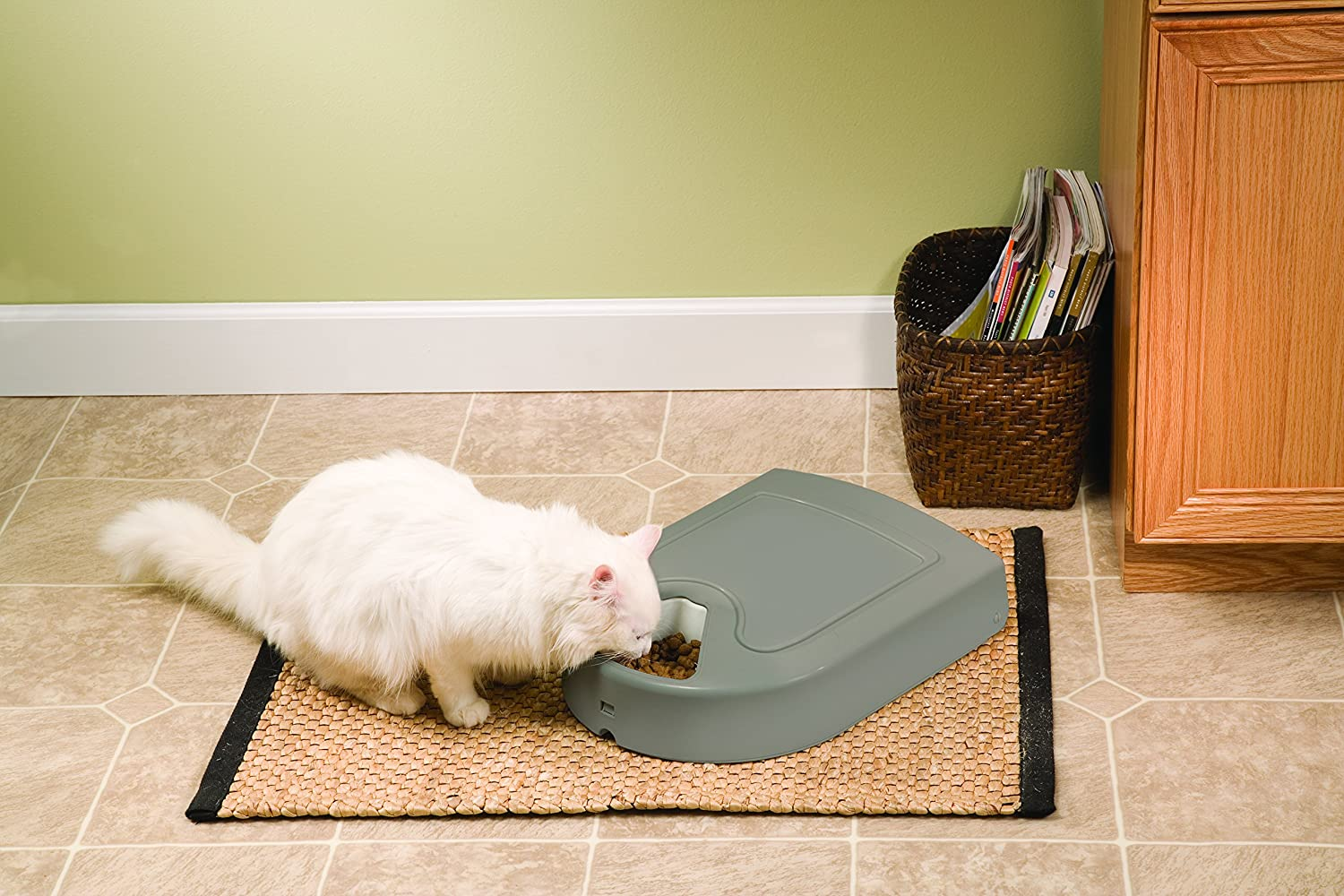 com petsafe dp pet eatwell meal automatic chewy feeder