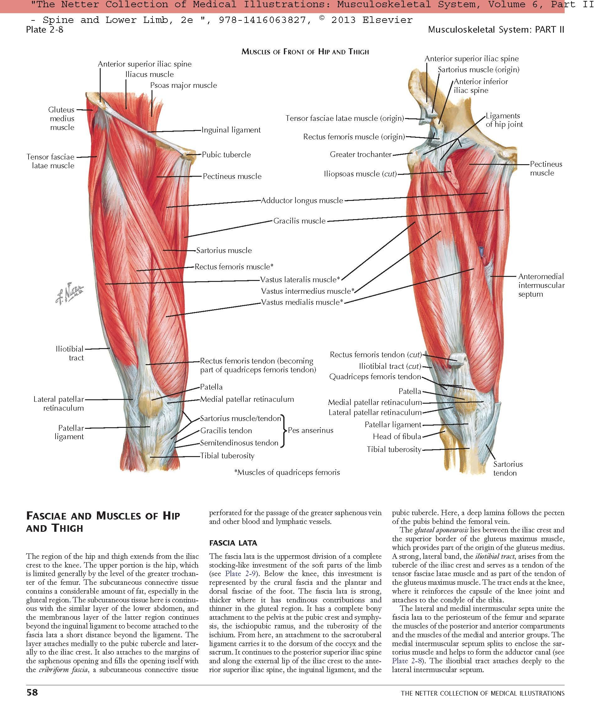 Buy The Netter Collection of Medical Illustrations: Musculoskeletal ...