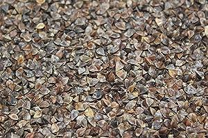 5 Lb. Buckwheat Wildlife Food Plot Seed, Quail, Ducks, Geese, Doves, Turkey, Wildlife