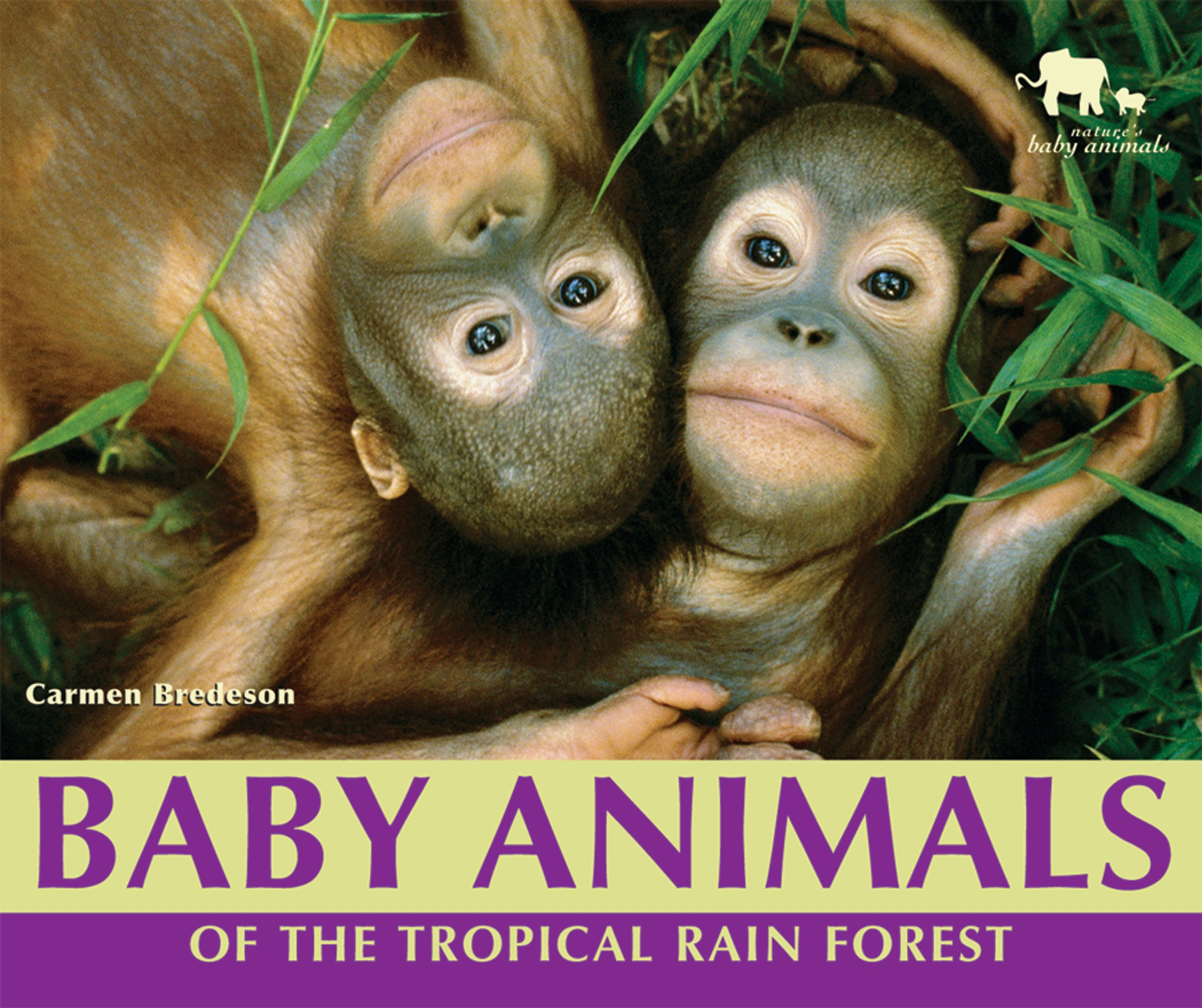 Image of: Cartoon Follow The Author Amazoncom Baby Animals Of The Tropical Rain Forest natures Baby Animals