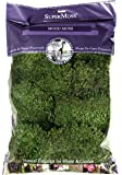 Super Moss 21539 Preserved Mood Moss, Natural Green, 8-Ounce