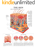 The Skin e-chart: Full illustrated (English Edition)