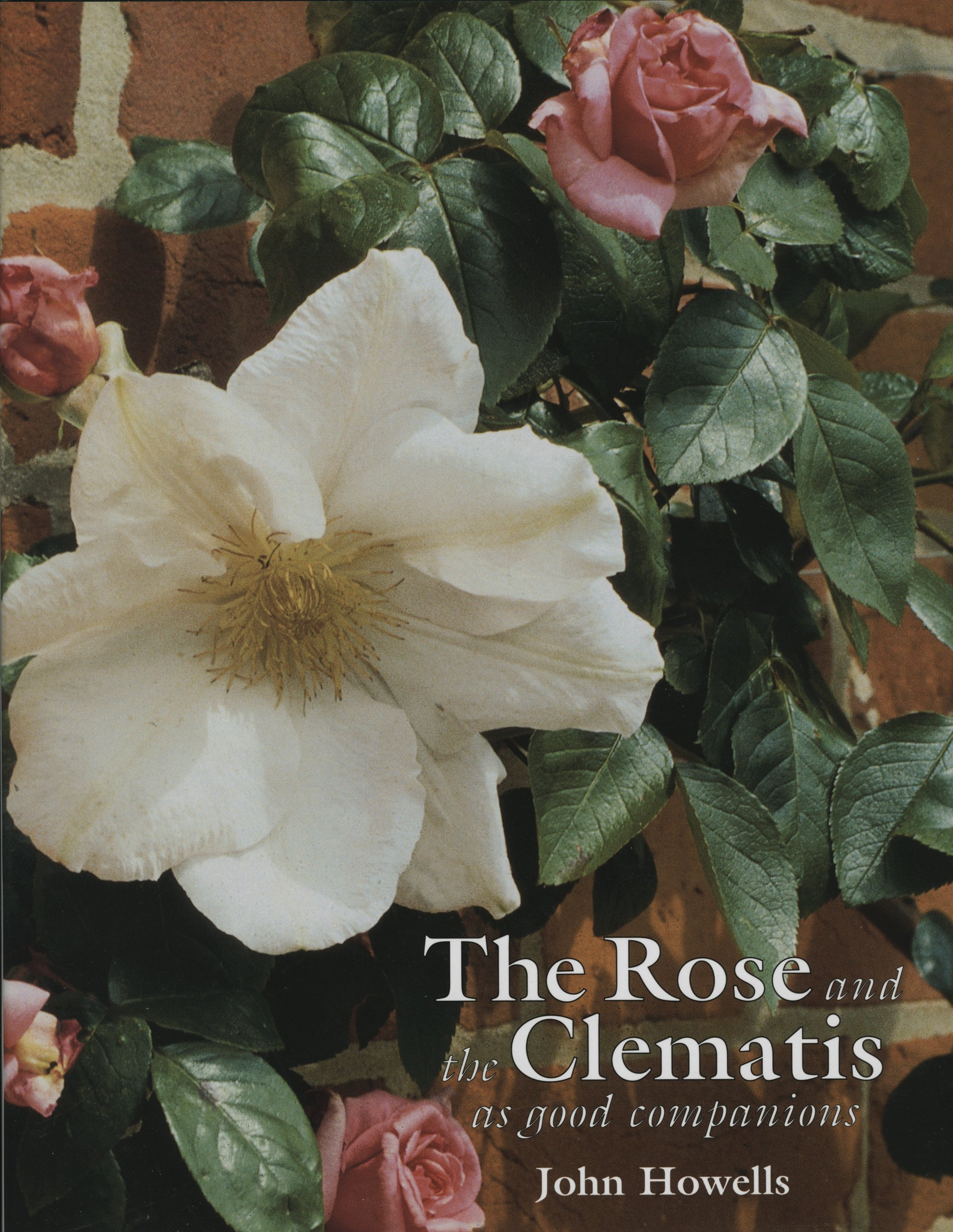 The Rose and the Clematis as Good Companions