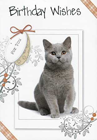 Birthday Card For Your Cat Birthday Card For Your Pet Best Friend