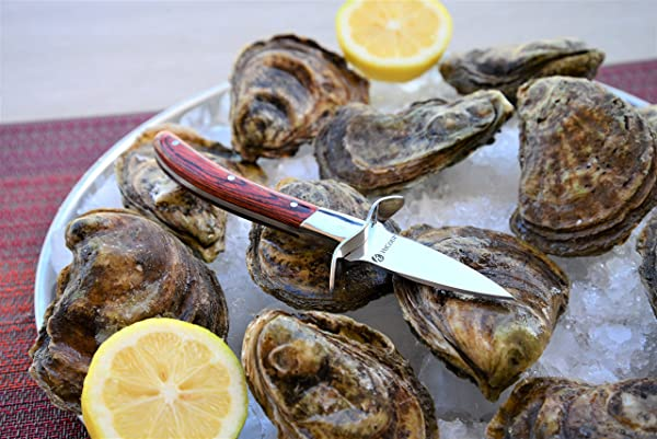 HiCoup Oyster Knife Review