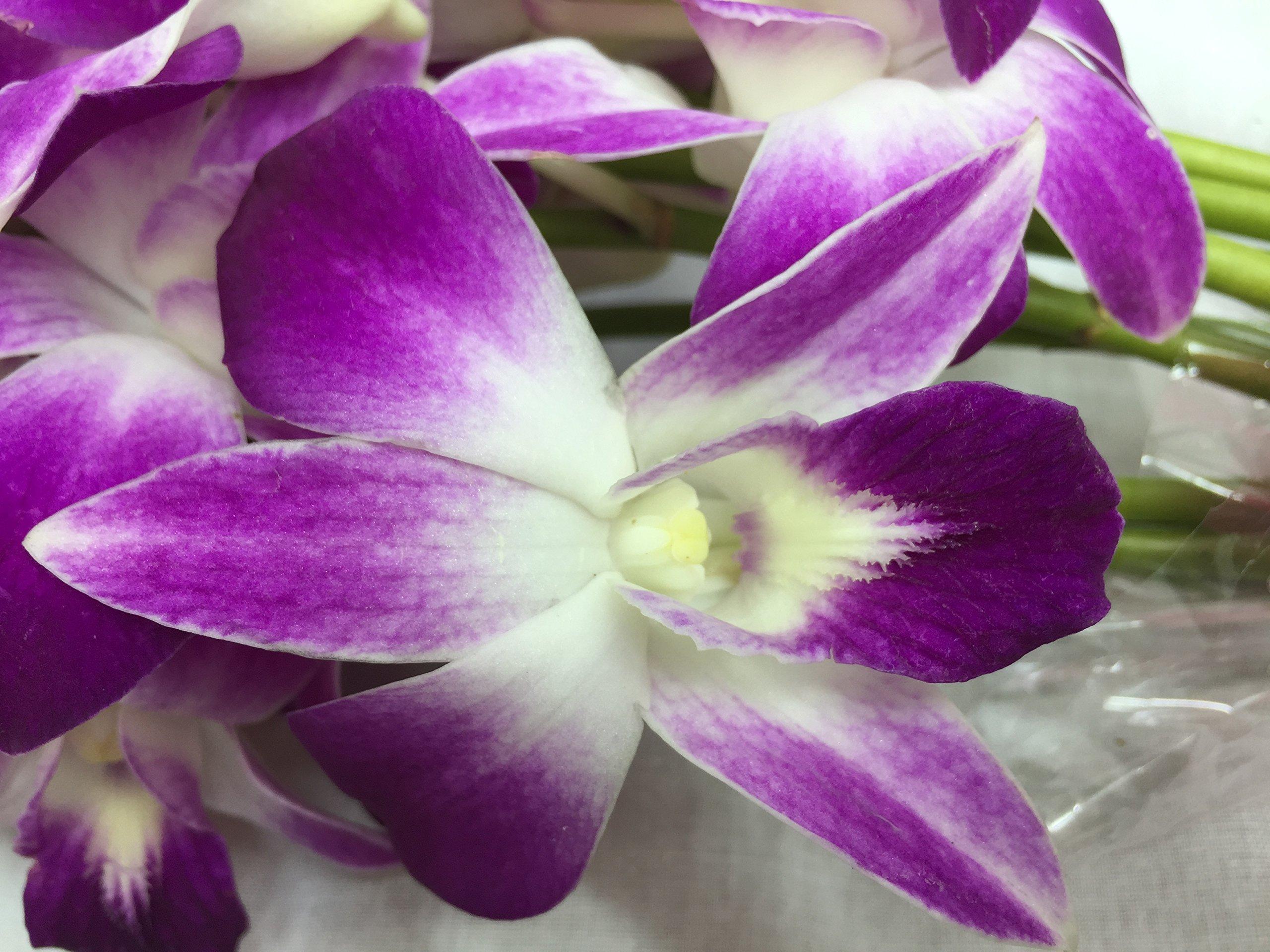 Premium Cut Purple Orchids (20 stems with Vase) by eflowerwholesale