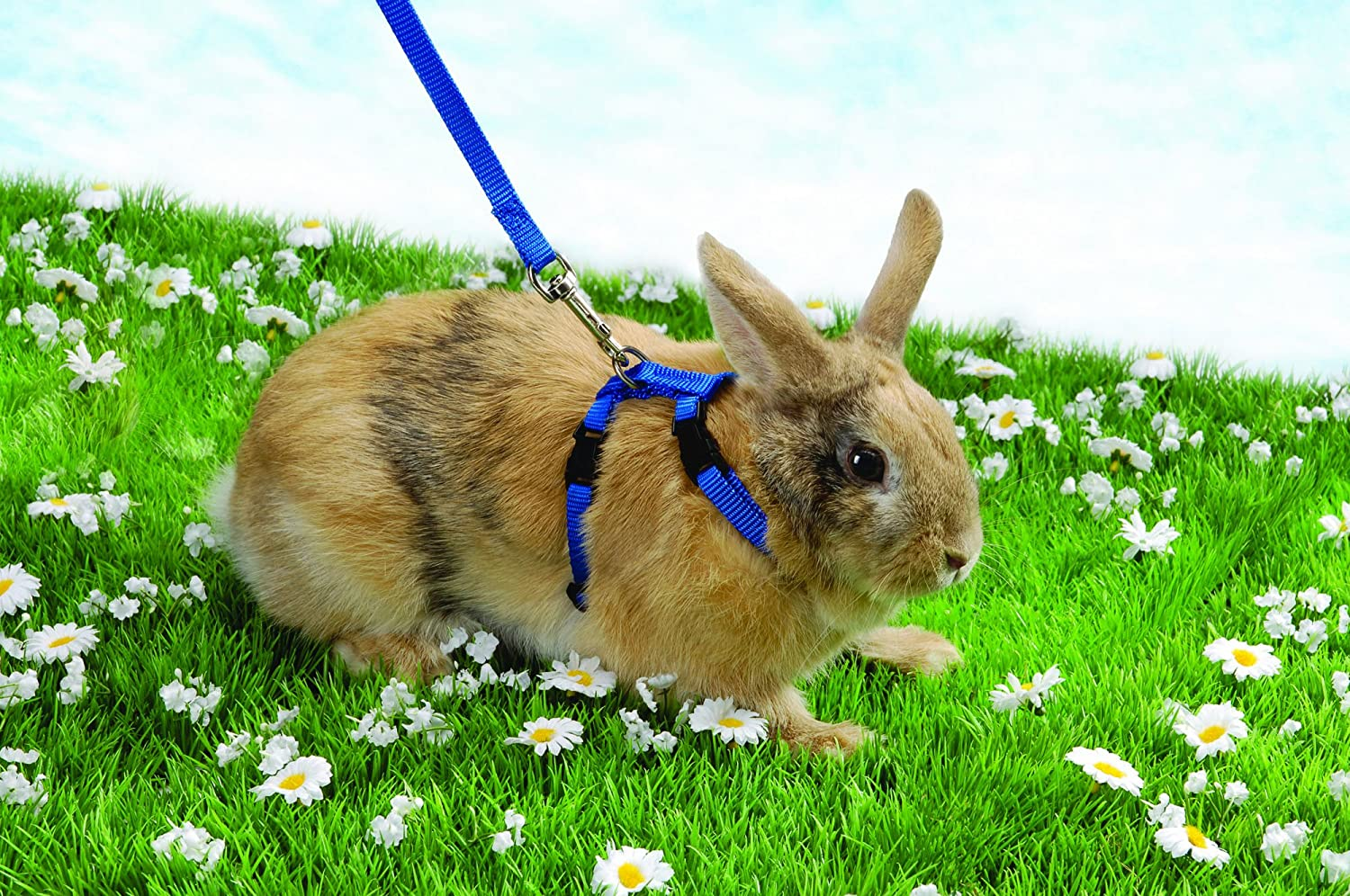 Rabbit Walking Harness Pattern Wire Center Electronics Schematic Diagram 8211 Max2659 Gps Gnss Low Noise Amplifier Amazon Com Trixie Plain Lead Set Pet Rh Rex