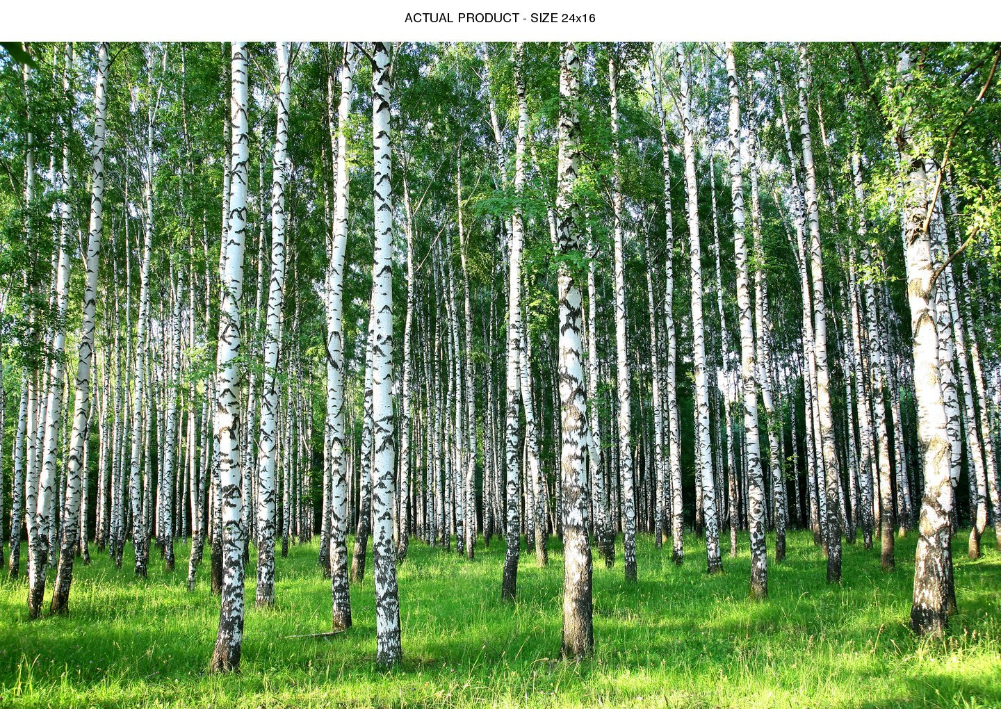 Windowpix 36x36 Inch Decorative Static Cling Window Film Sunlit Forest Trees Printed on Clear for Window Glass Panels. UV Protection, Energy Saving. by Windowpix (Image #2)