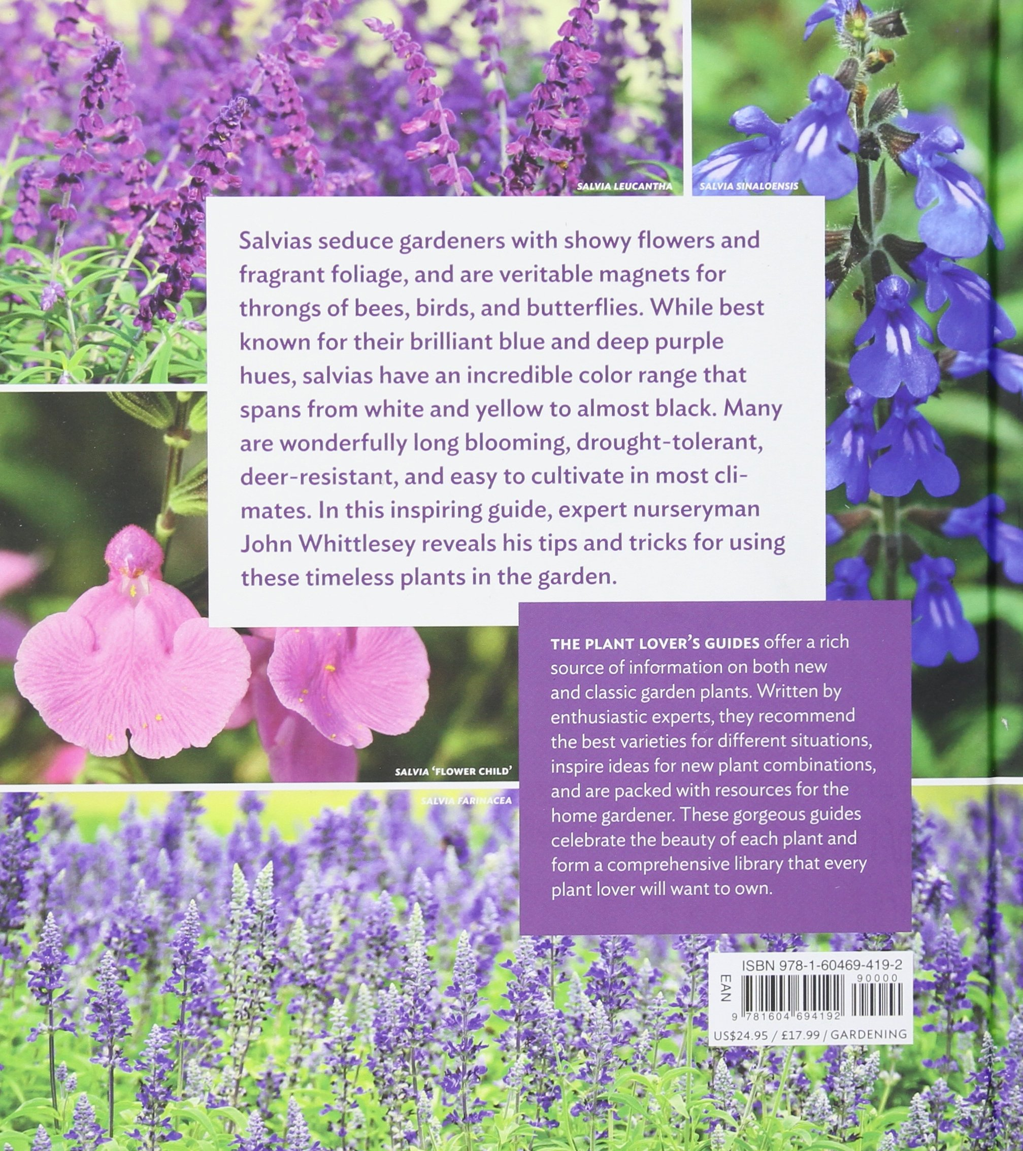 the plant loveru0027s guide to salvias the plant loveru0027s guides john whittlesey amazoncom books - Salvia Plant