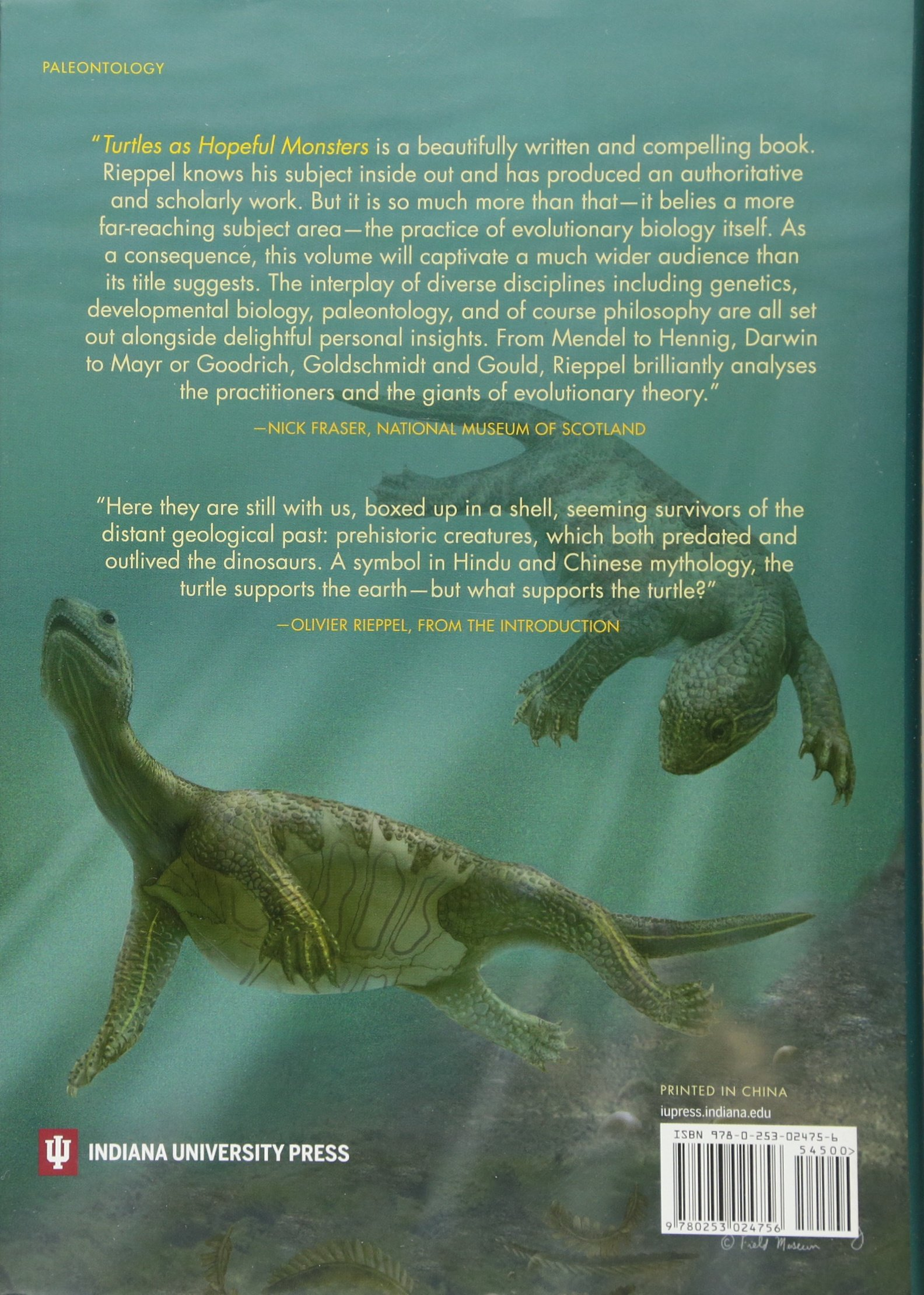 Turtles As Hopeful Monsters Origins And Evolution Life Of The Past