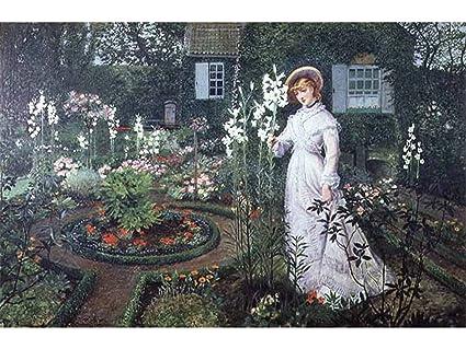 Amazon.com The Rector\u0027s Garden, Queen of The Lilies by John
