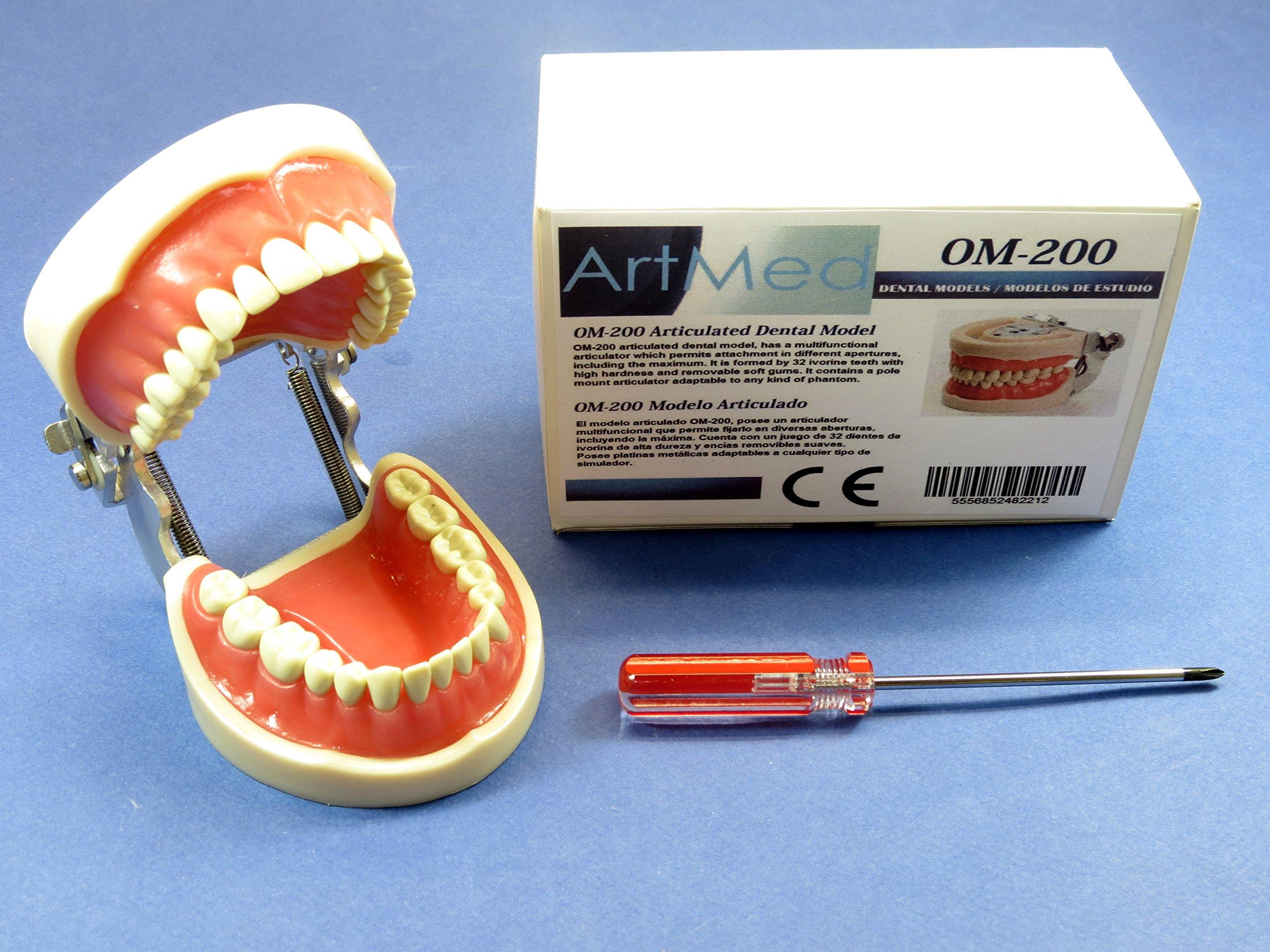 Model Typodont Dental Universal Plate OM-200 Type Kilgore Nissin Removable Teeth