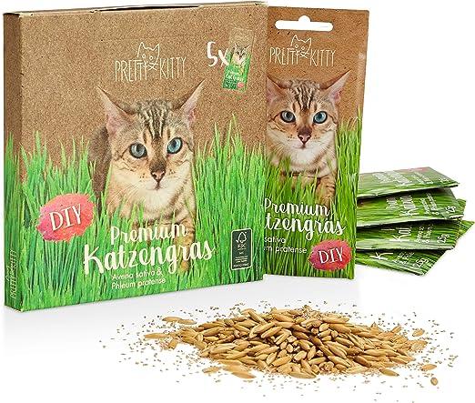PRETTY KITTY 5X Semillas de Menta de Gato Premium - Paquete de 5 Bolsas con Semillas de Hierba gatera para Aproximadamente 50 macetas: Amazon.es: Productos para mascotas
