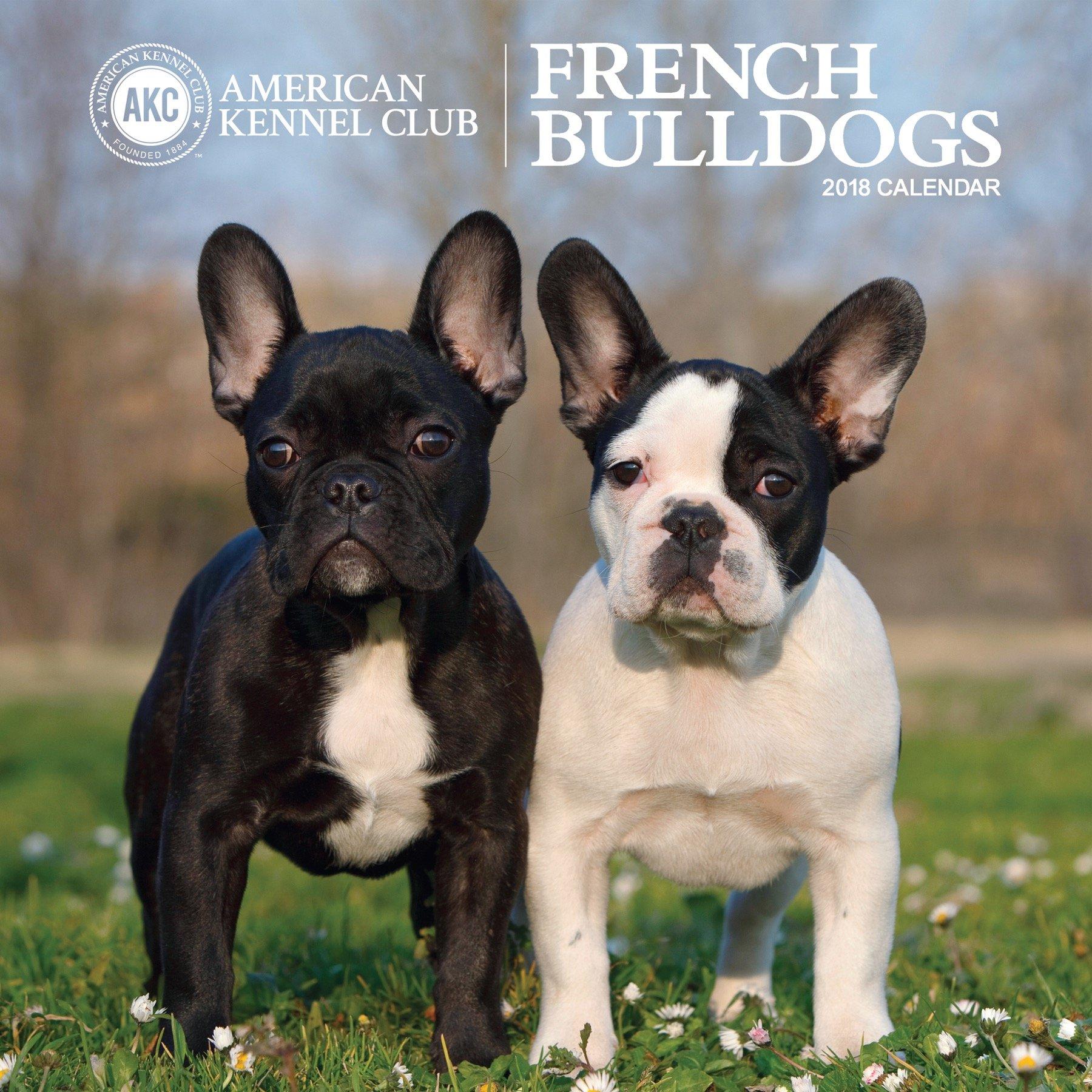 american kennel club french bulldogs 2018 wall calendar zebra
