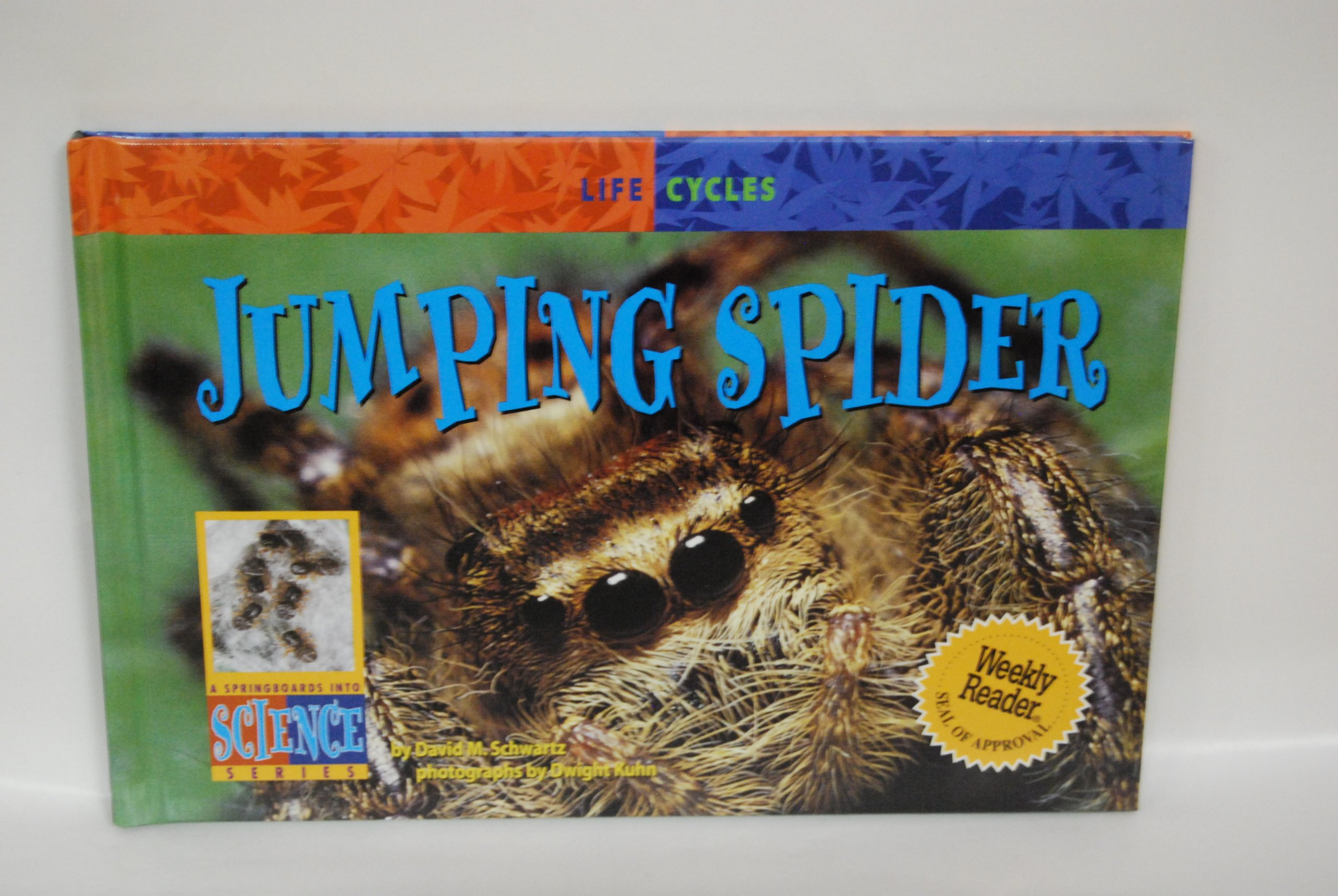 Jumping Spider (Life Cycles)