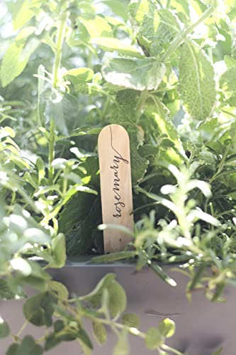 Letterpress Herb Garden Marker Set, Gardener Gift, Calligraphy, Christmas  Gift, Stocking Stuffer