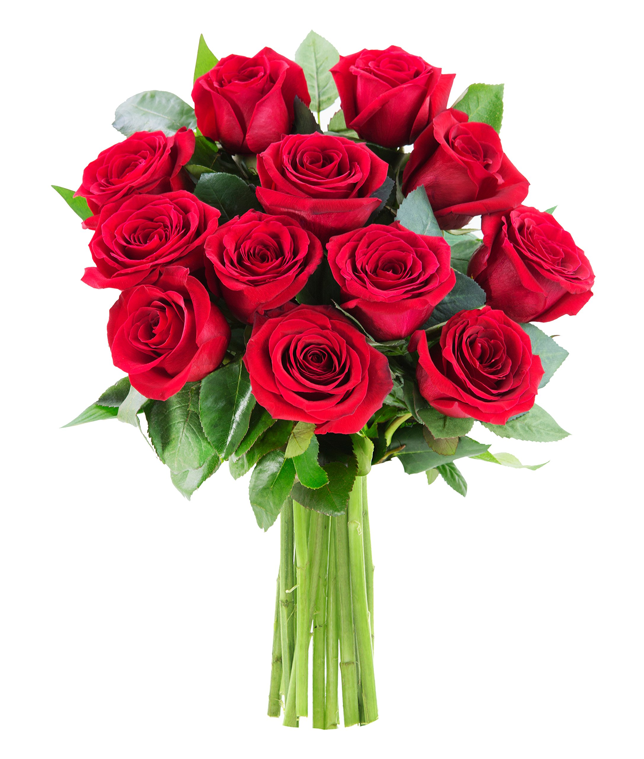 KaBloom The Romantic Classic Bouquet of 12 Fresh Red Roses (Farm-Fresh, Long-Stem)