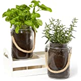 """Mason Jar """"Grow Your Own Herbs"""" Set: Rosemary & Basil with Jute Rope for Hanging: Makes a Great Decoration Piece and is Perfect for Starting your Own Garden or Growing Your Own Food"""