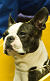 Photo Gallery of Boston Terrier (English Edition)