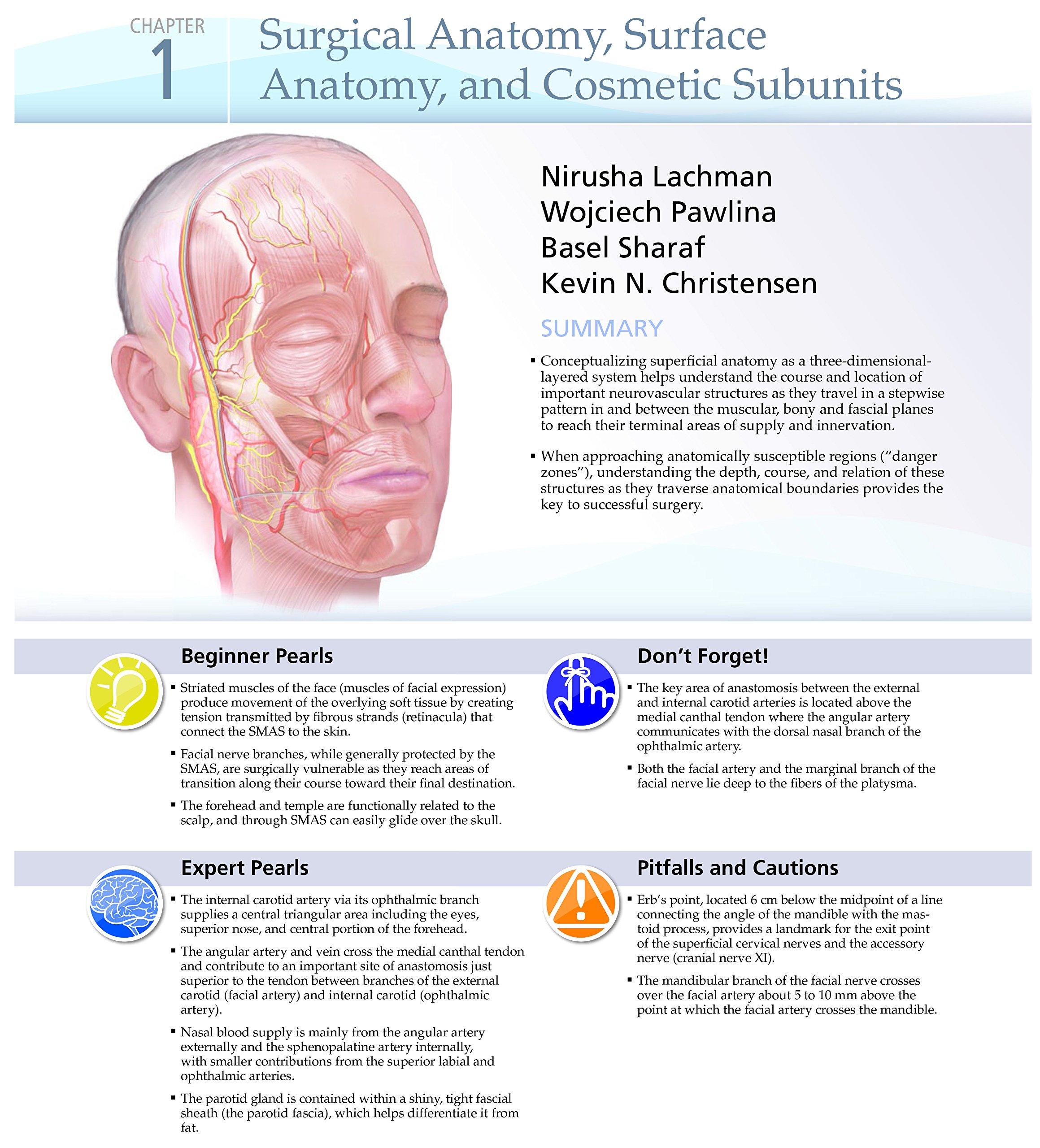 Ziemlich Schweinehirnanatomie Bilder - Menschliche Anatomie Bilder ...