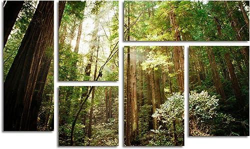 Trademark Fine Art Muir Wood