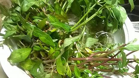 Amazon.com : Herbs Mixed Rooted (Vietnamese coriander \