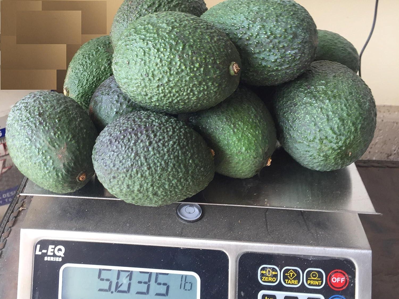 Fresh Avocado (18 Avocados)