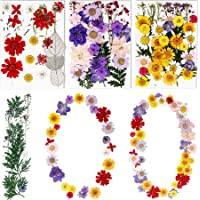 BIHRTC 100PCS Died Pressed Flowers Natural Colorful Pressed Flowers Real Dry Flowers Leaves Set Died Flowers for Resin…