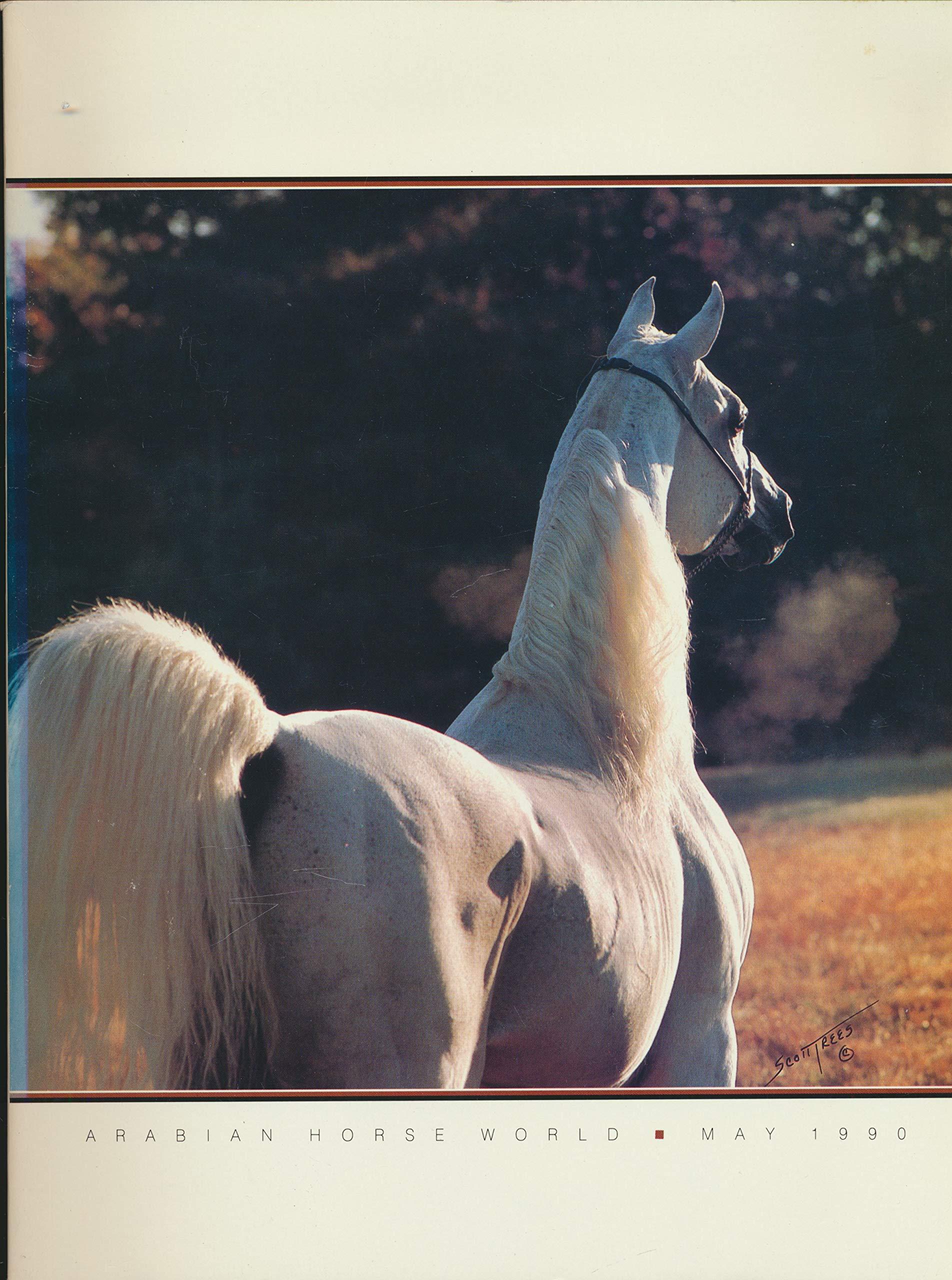 Show results arabian scottsdale Arabian Horse