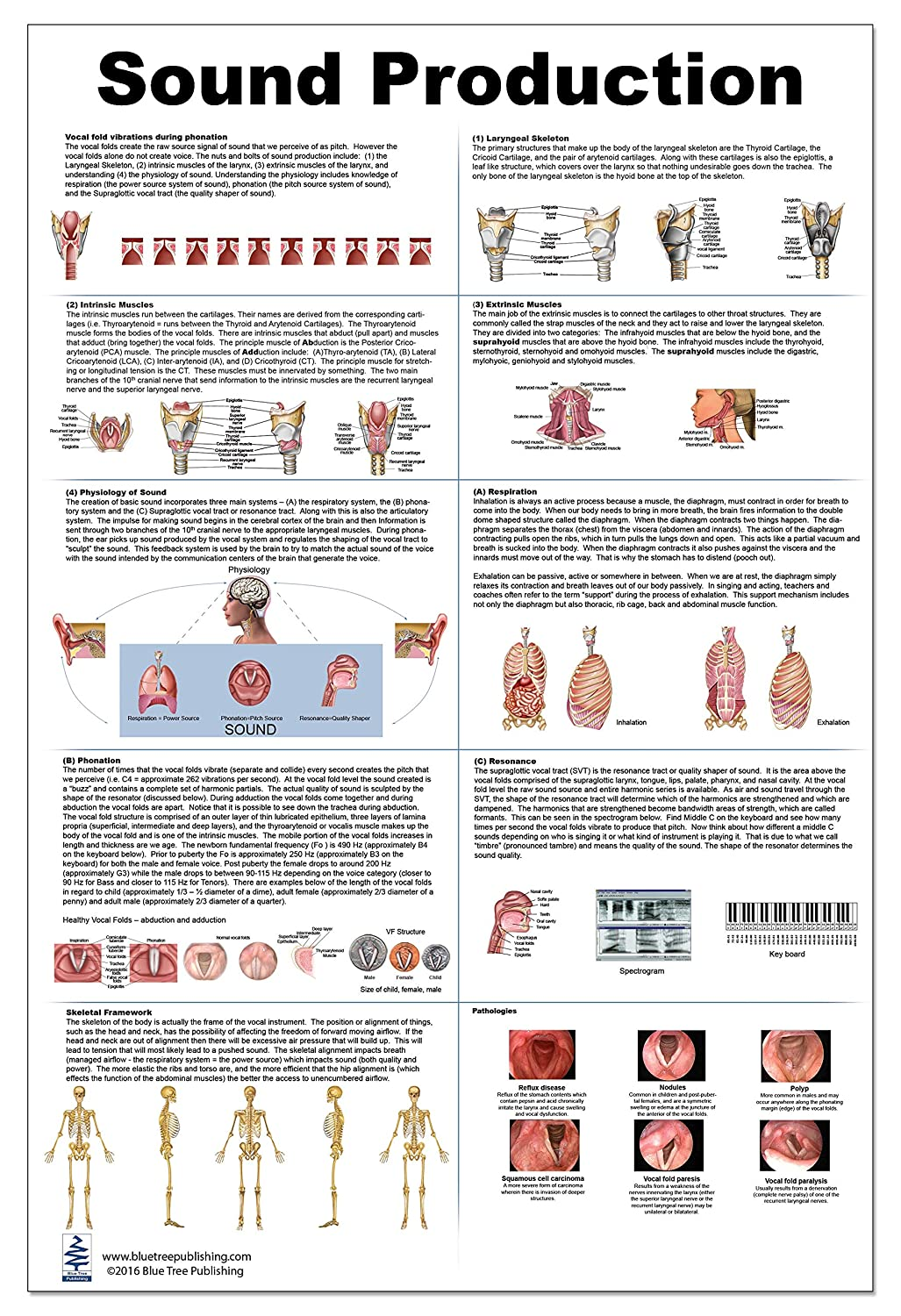 Amazon Sound Production Anatomy Poster 24x36inch Waterproof