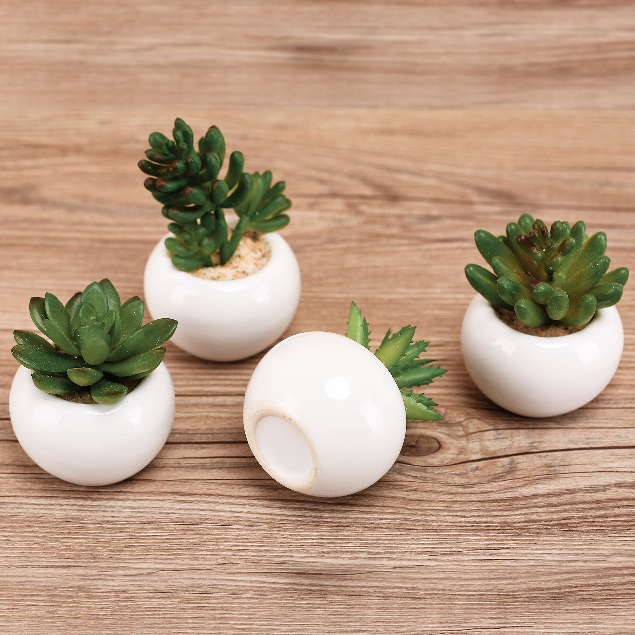 3-inch Mixed Green Artificial Succulent Plants in Round Glazed White Ceramic Pots, Set of 4 by MyGift (Image #3)