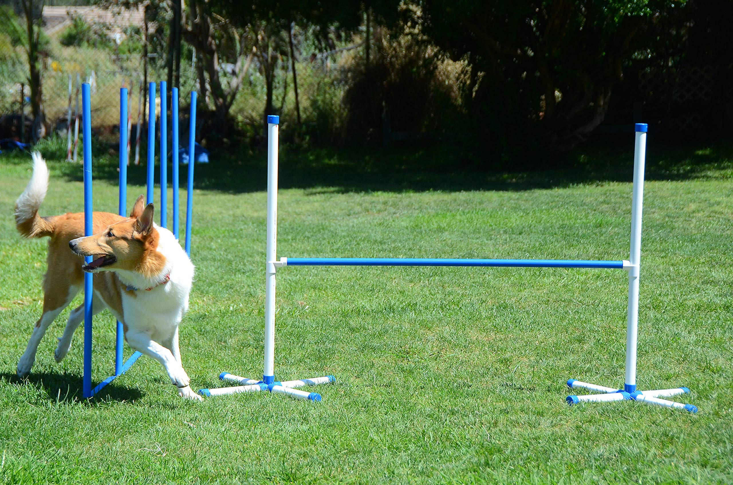 Triple A Dogs Combo 1 Dog Agility Jump/6 Dog Agility Weave Poles Buy Combo and Save, Dog Training, Dog Jumps, Dog Hurdles, Agility Equipment, by Triple A Dogs