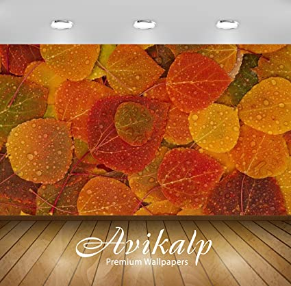 Avikalp Full Hd Beautiful Colour Leaves With Water Drops Vinyl