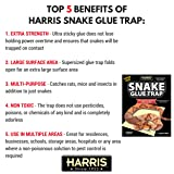 HARRIS Supersized Snake Glue Trap - Extra Strength, Non-Toxic and Multipurpose