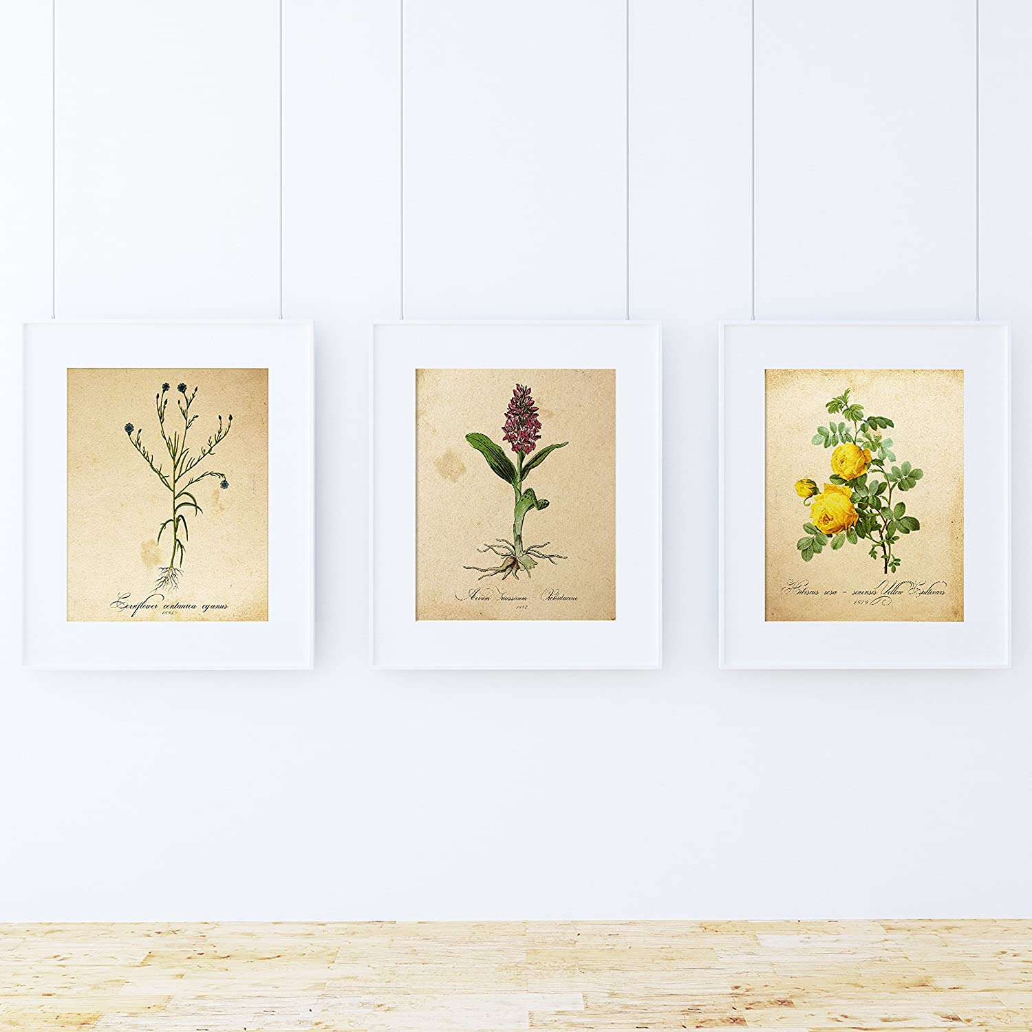 Nacnic Sense foil Pack. Posters with Pictures of Botany. Home Decoration. Sheets for framing. 250 Grams Paper