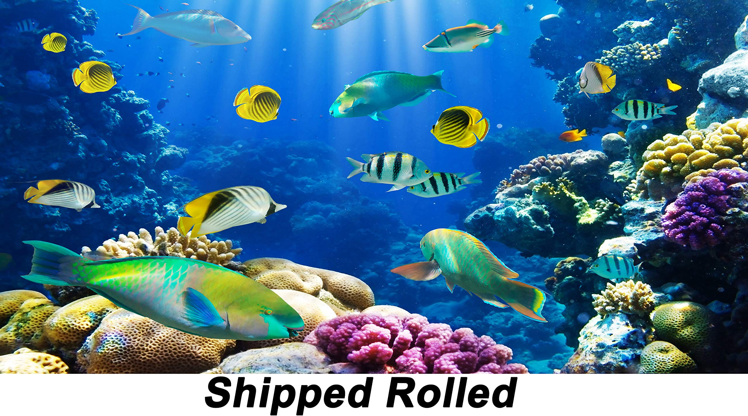 Submarine World Backdrop Chic Seabed Underwater World Marine Scene Fishes Blue sea Water with Sunshine and Stones Rocks Bottom Printed Fabric Photography Background (F0516, 16' Wide by 8' Tall)