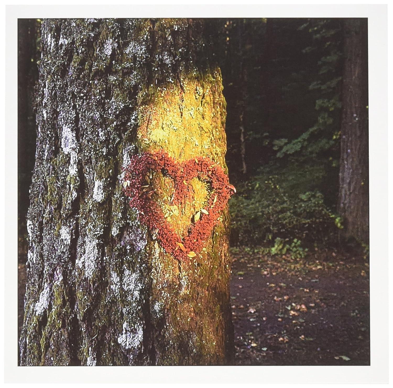 3dRose Oregon, Mt  Hood NF, Douglas-fir tree, love - US38 BJA0035