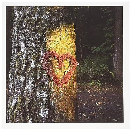 Amazon com : 3dRose Oregon, Mt  Hood NF, Douglas-fir tree