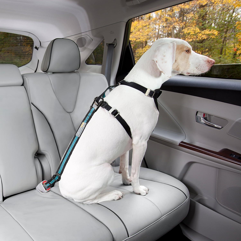 detailed look low price sale arriving Best Dog Seat Belt | Smart Dog Stuff 👌