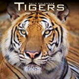 Tiger Calendar - Calendars 2016 - 2017 Wall Calendars - Animal Calendar - Tigers 16 Month Wall Calendar by Avonside
