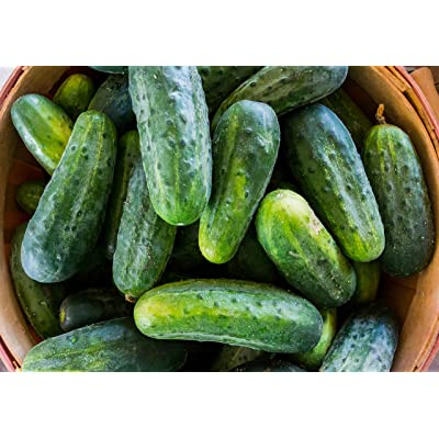 Bush Crop - Cucumber Seeds : Cucumber Plants : Garden & Outdoor