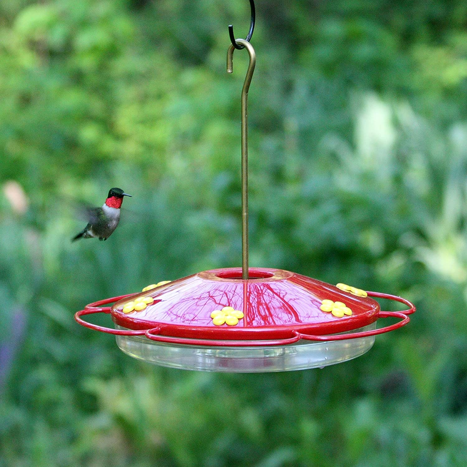 humingbird feeder glass stripe hummingbird envy yard blue dew red drop htm and p