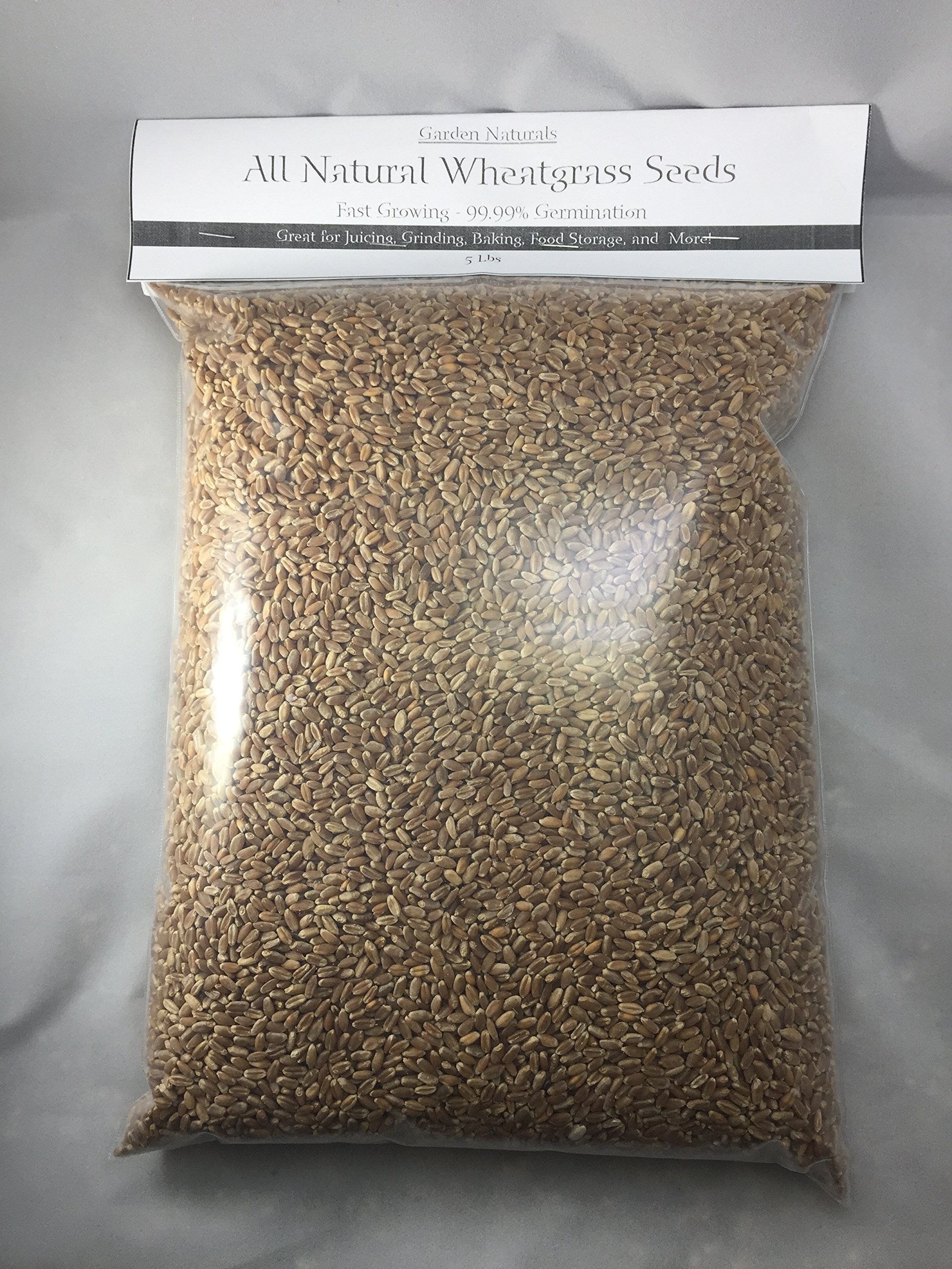 All Natural Wheatgrass by Garden Naturals 50 Lbs 99.99% Germination - Guaranteed to Grow!