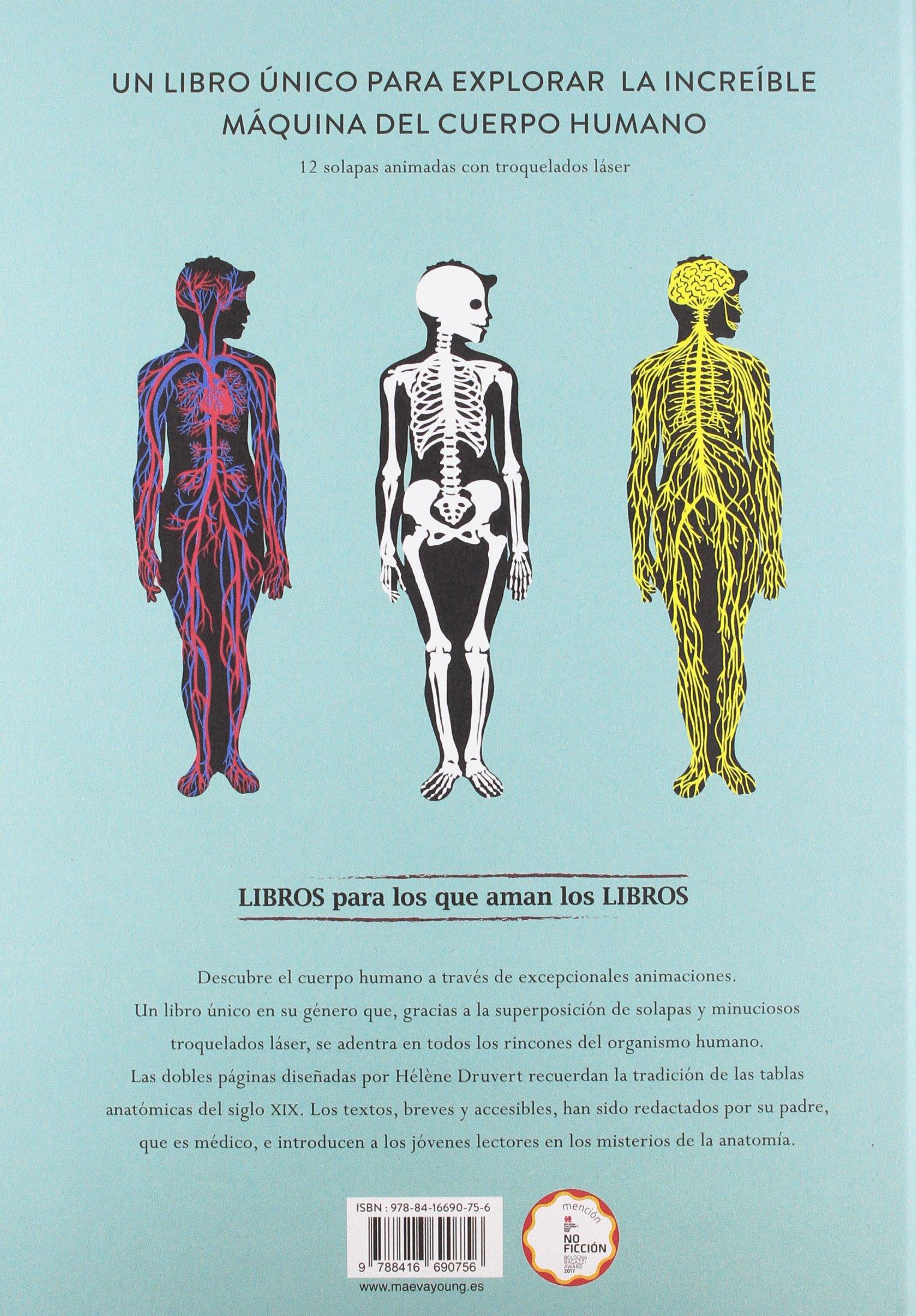 Anatomía: Troquelados e ilustraciones para observar el cuerpo humano ...