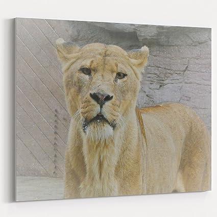 Amazon com: Westlake Art Lion Big - 5x7 Canvas Print Wall