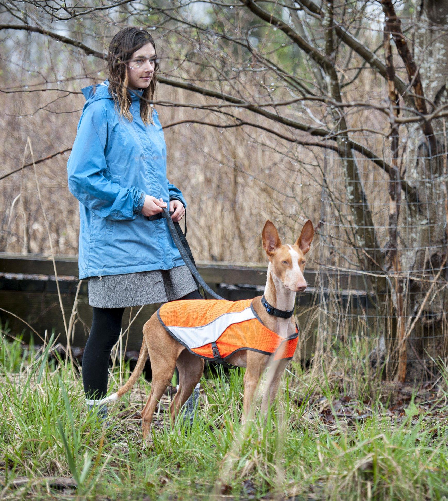 Canine Friendly High Visibility Dog Vest, Large