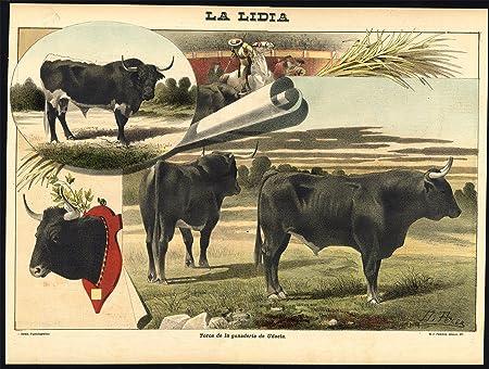 Impresión antigua - Las corridas de toros-tauromachia-udaeta-españa-torero - PL. 13 de la Lidia-1893: Amazon.es: Hogar