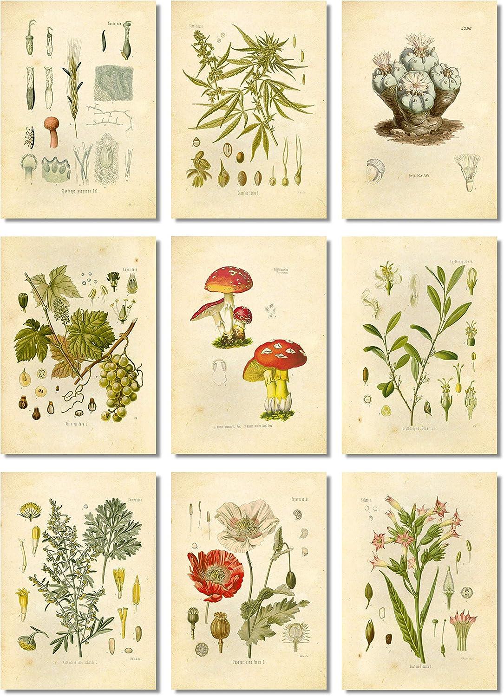 Ink Inc. Psychoactive Hallucinogenic Plants Botanical Drawings Vintage Art Prints, Set of 9, 5x7in, Unframed, Cannabis Coca Opium Poppy Tobacco Wormwood Grapes LSD Mushrooms Peyote