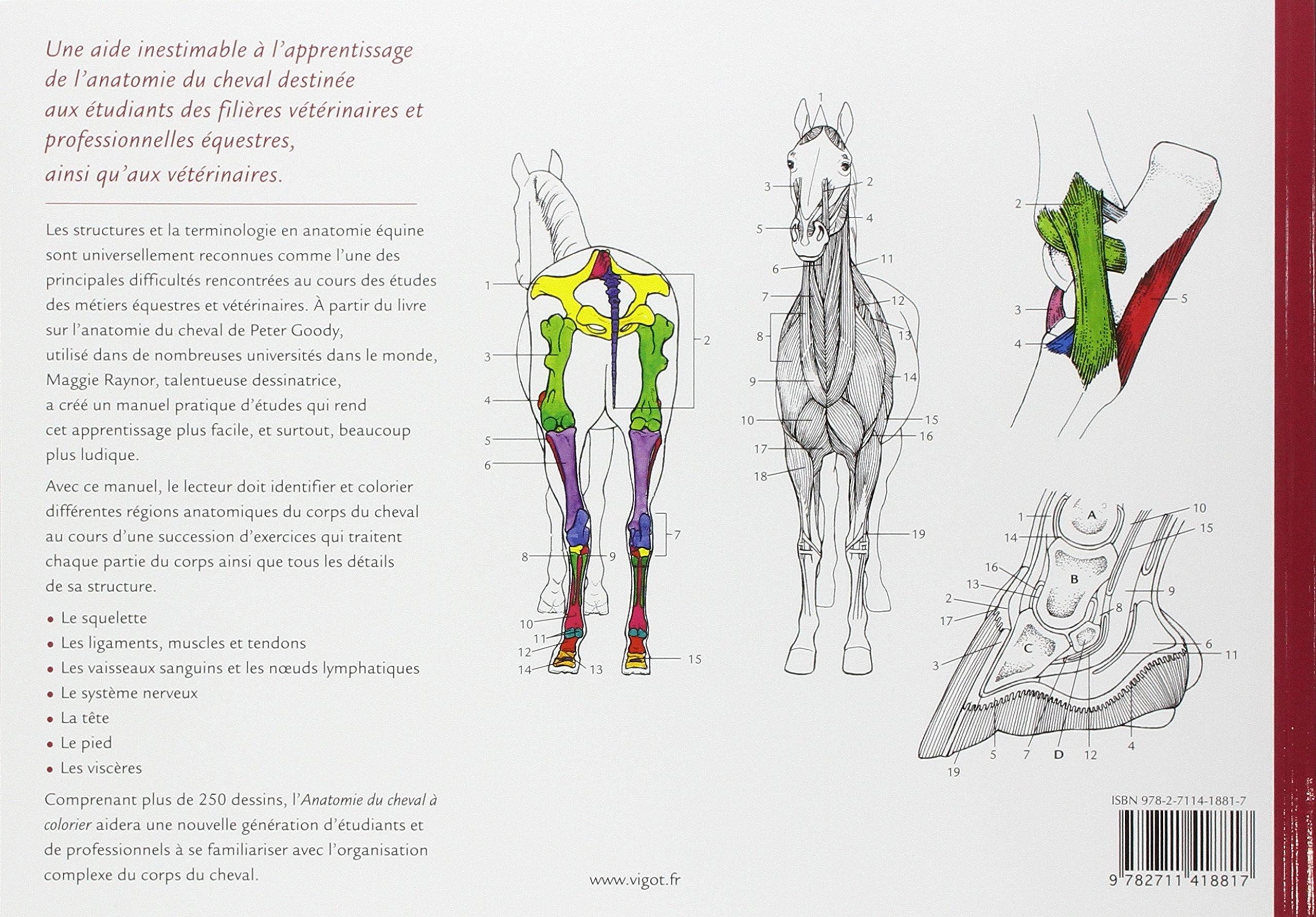 Coloriage Homme Cheval.Amazon Fr Anatomie Du Cheval A Colorier Une Aide A L