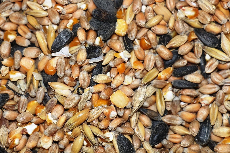 25kg Meck lenburger Land koern Fodera–OGM libero FutterXL